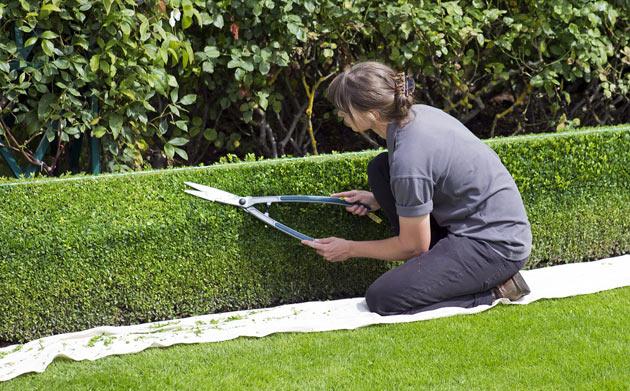 hedge shear pruning tool