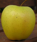 golden-delicious-apple.jpg