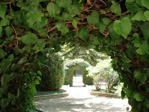 ivy-cloaking-an-arch.jpg