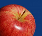 royal-gala-apple.jpg
