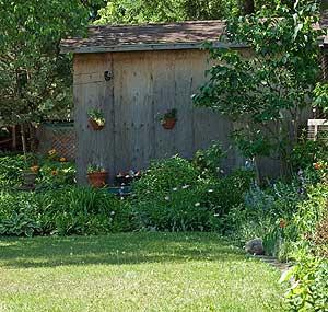 shaded-backyard.jpg