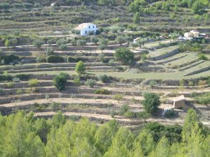 terracing.jpg