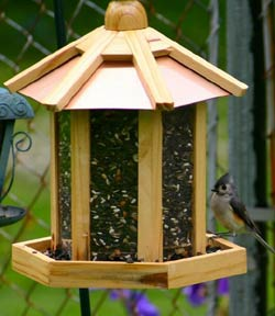 window-bird-feeder.jpg