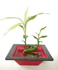 bamboo-gift.jpg