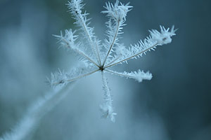 frost-covered-plant.jpg
