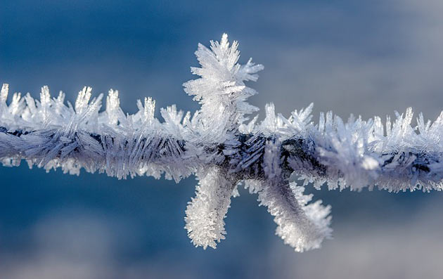 frost covered twig