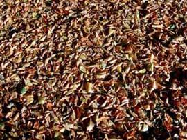 compost-material.jpg