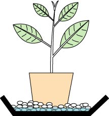 potted-herb-plant.jpg