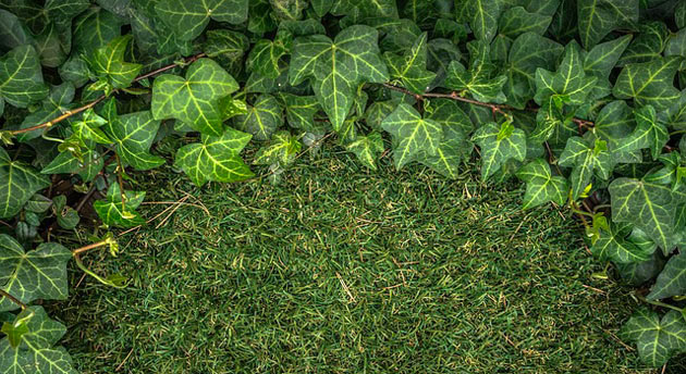 artificial ivy and turf