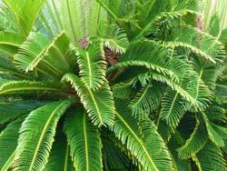 fern-plant-tropical-setting.jpg