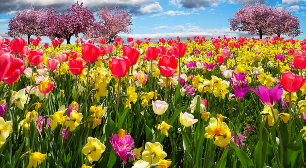 springtime blooming