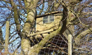 Tips to consider before you build a treehouse