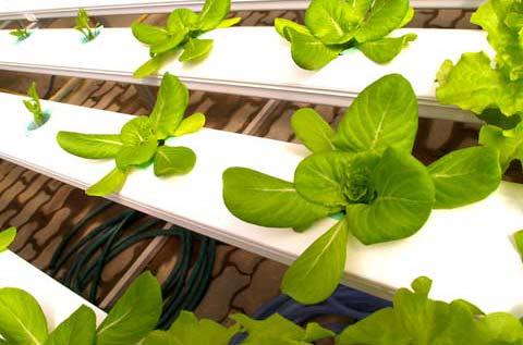 http://www.gardeningsite.com/wp-content/uploads/2008/05/aeroponics.jpg