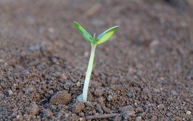 Herb gardening soil considerations