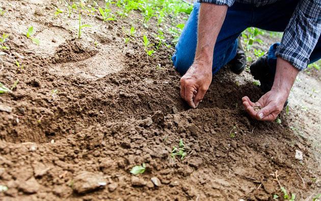 herb gardening soil