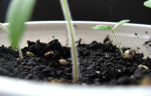 Herb gardening soil considerations - Gardening Site