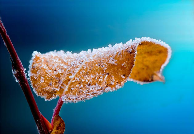Winter protection for shrubs and plants