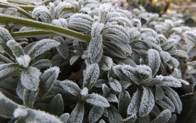 winter plant leaves