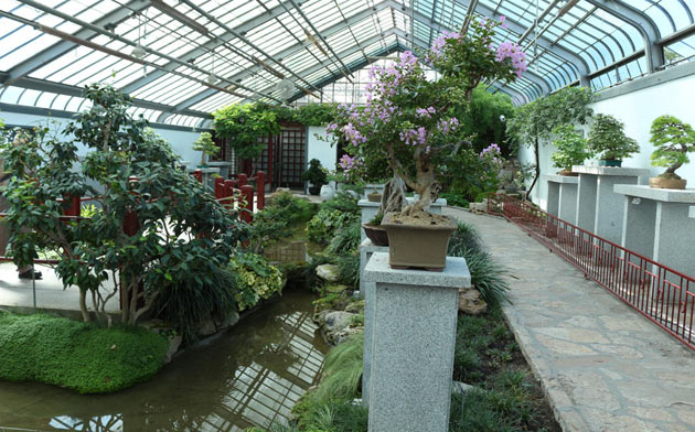 asian style greenhouse