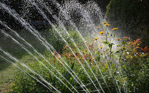 garden sprinkler in action