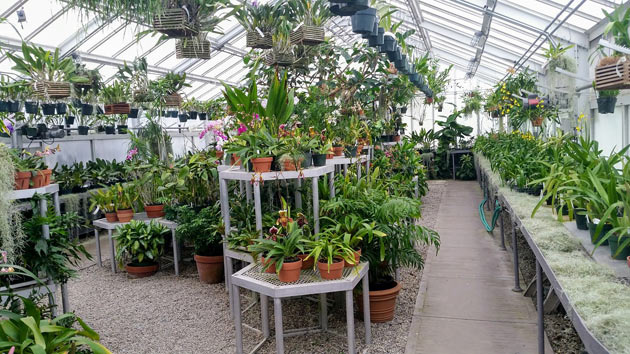 well maintained greenhouse