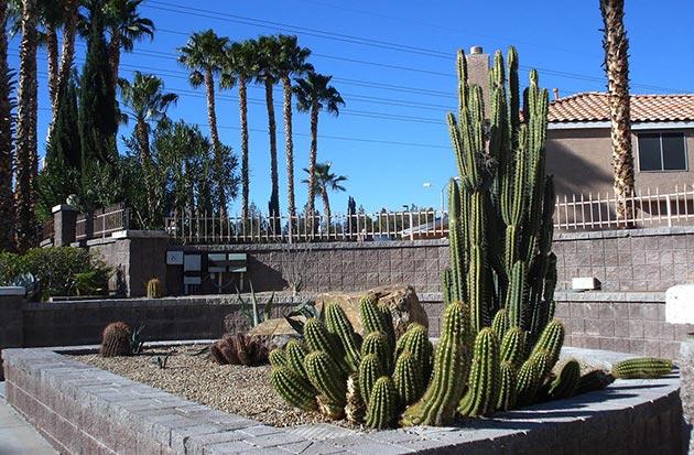 Creating a cactus garden