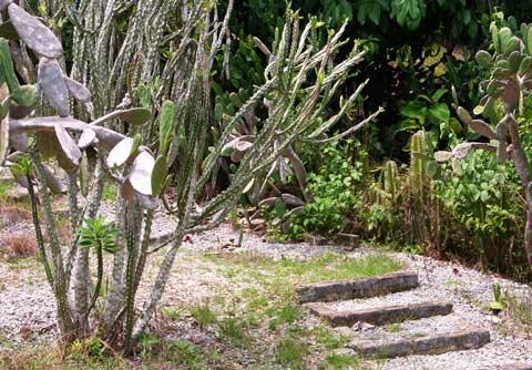 Cactus garden footpath