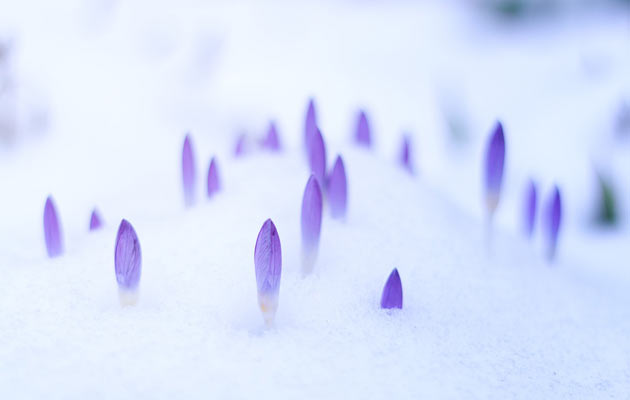 herbs in winter