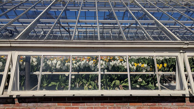 greenhouse glass panes and frame