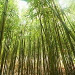 What I like about bamboo plants