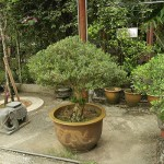 Basic Styles in Bonsai