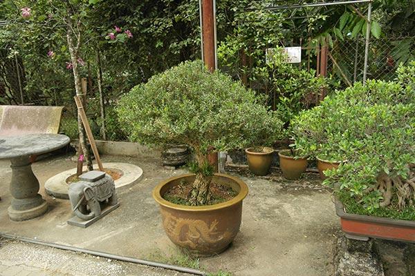 Basic Styles in Bonsai