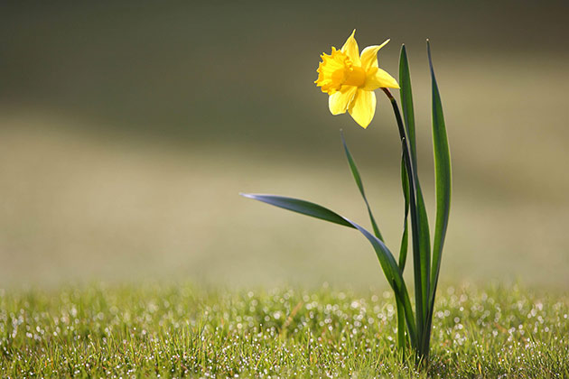 A list of bulbs that will give great results in spring