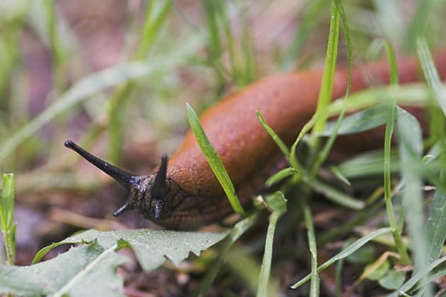 How Get Rid Of Slugs In The Garden Gardening Site
