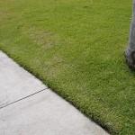 Preparing your lawn soil
