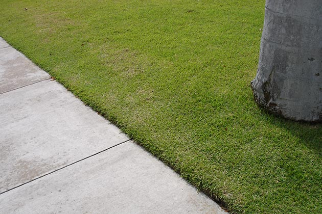 Preparing your lawn soil