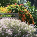 Choosing a suitable shrub
