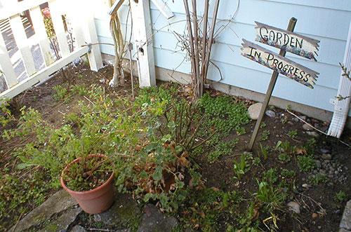 beginning organic garden