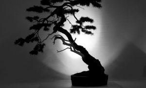 The Slanting Style in Bonsai