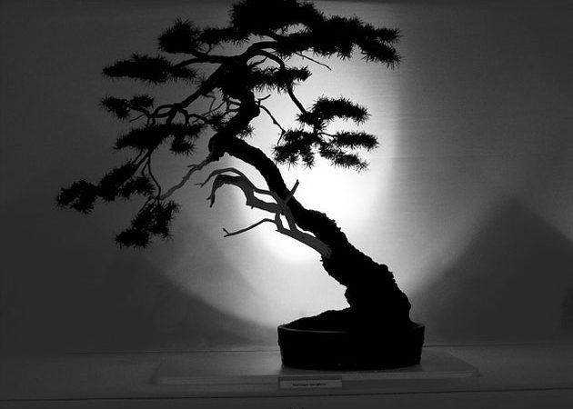 The Slanting Style in Bonsai