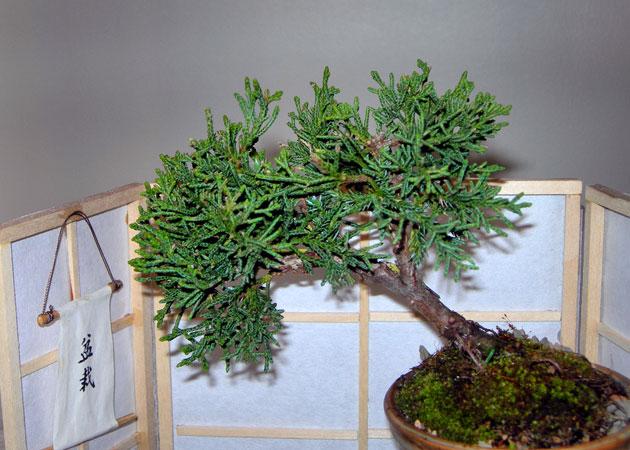 bonsai slanting style