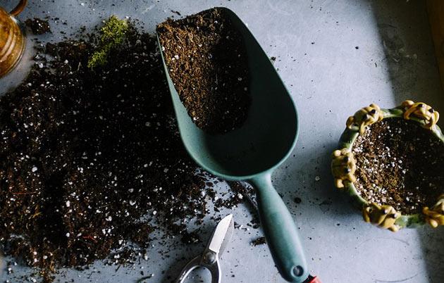 soil for perennials