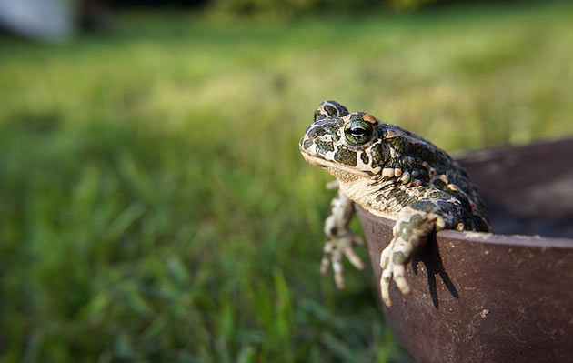 toad relaxing