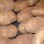 How to Grow Healthy Organic Potatoes