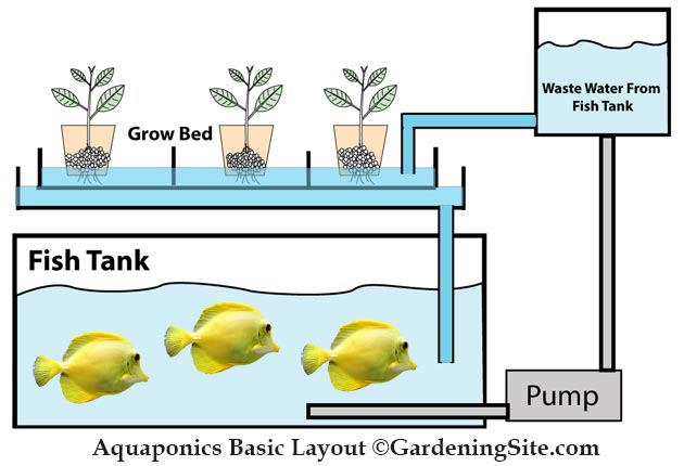 aquaponics layout diagram
