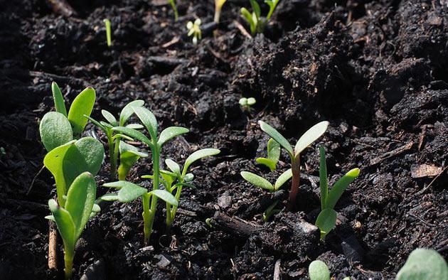 seed starting soil