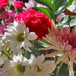 Growing Carnations & Daisies