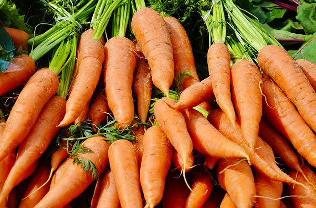 carrots freshly harvested