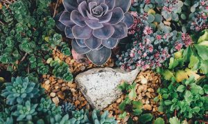 Growing Succulents at Home