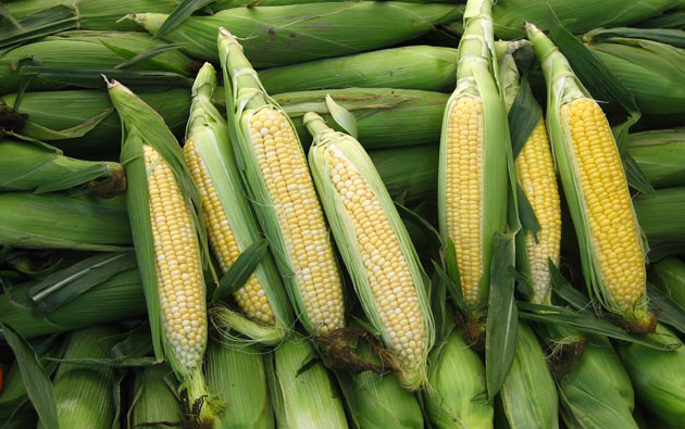 Growing Sweet Corn at Home